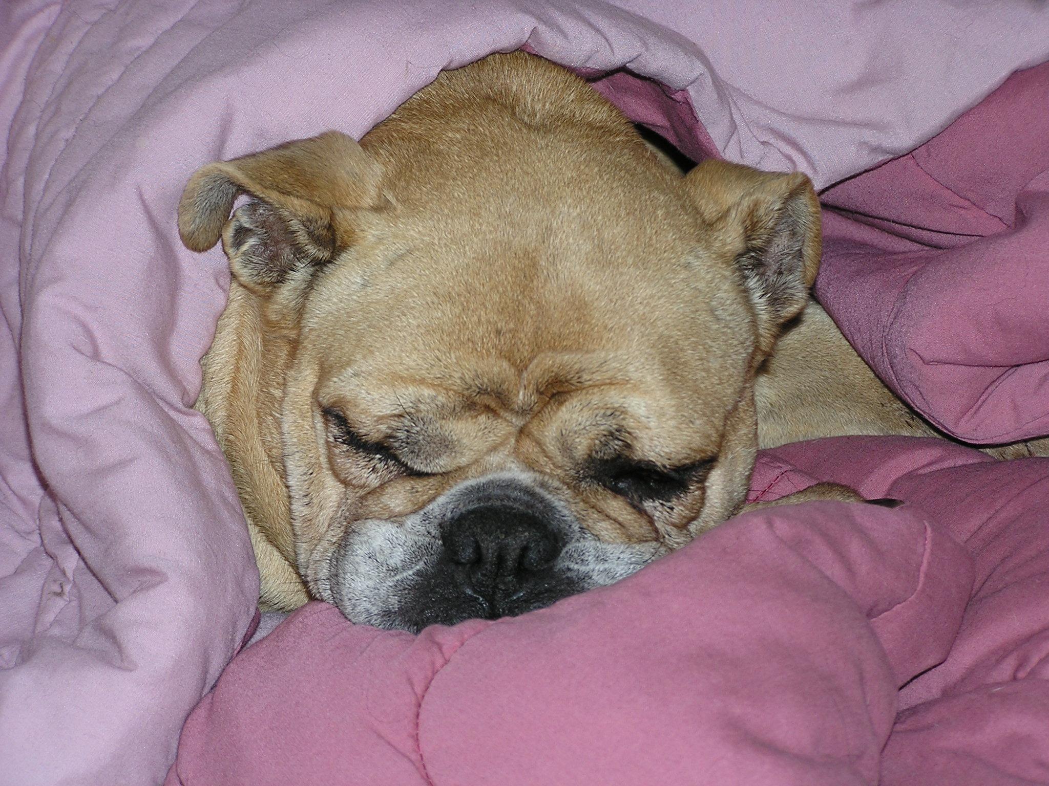 Ridenbaugh Press/Dog Rescue » Adopting